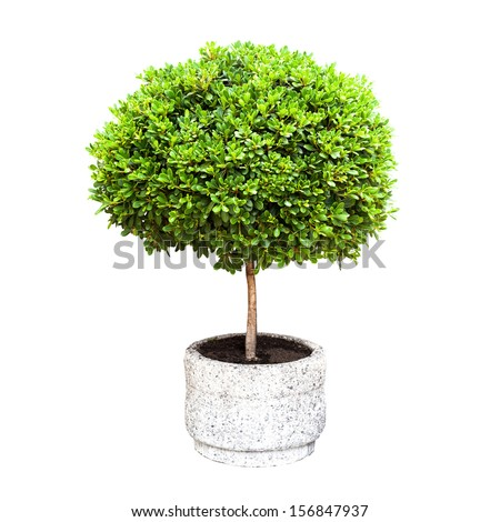 Small green decorative tree growing in a pod isolated on white - stock photo