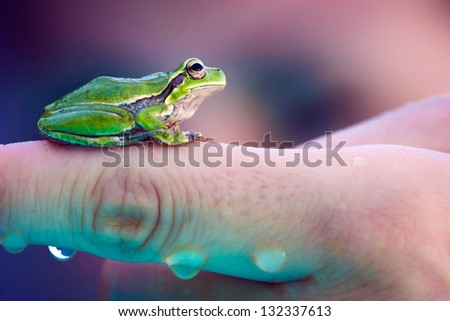 Small green frog on a finger - stock photo