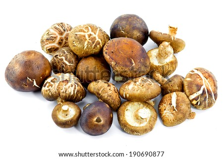 Small group of japanese mushrooms, isolated on white. / Shiitake Mushroom isolated on white - stock photo