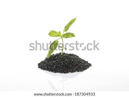 small growing plant, dirt, on white background - stock photo