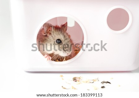 Small hamster at home on white background - stock photo