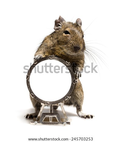 small hamster rodent standing with big drum full-length closeup on white background - stock photo
