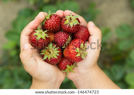 small hands holding a fresh strawberry - horizontally - stock photo