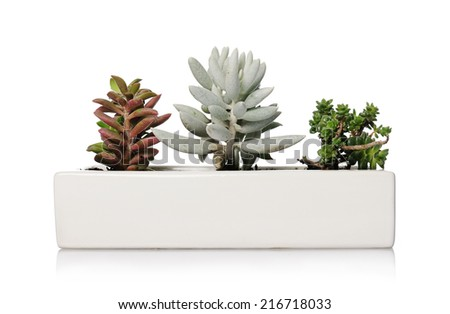 small houseplants - stock photo