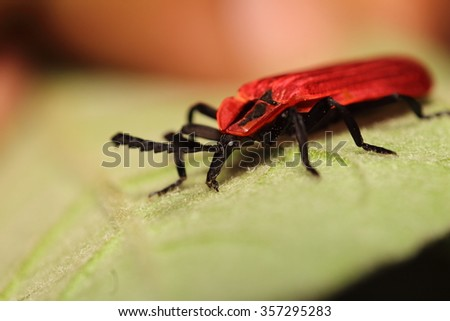Small insect in the garden Thailand - stock photo