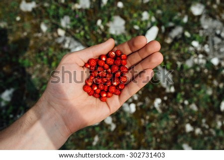 small juicy strawberries in the hand - stock photo