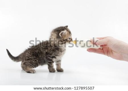 small kitten eating milk from the bottle - stock photo