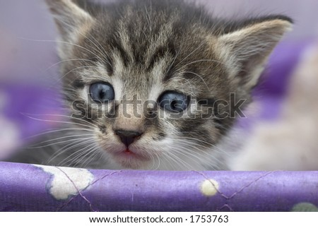 Small kitten in a baby carriage - stock photo