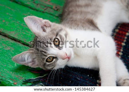 Small kitten lying on the bench - stock photo