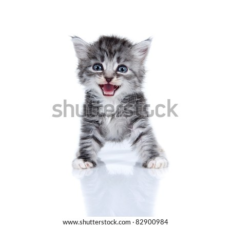 Small kitten on a white background. Age - 1 month - stock photo