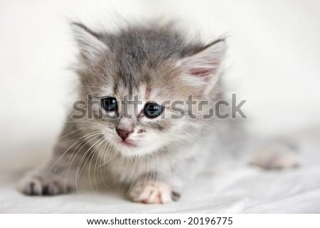 Small kitten on white background - stock photo