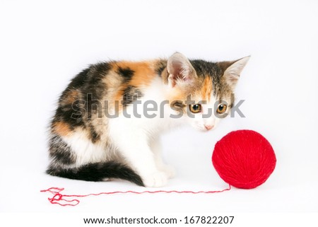 Small kitten playing with a ball of yarn - stock photo