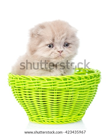 Small kitten sitting in green basket. isolated on white background - stock photo