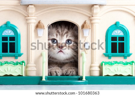 small kitten sitting in toy house - stock photo