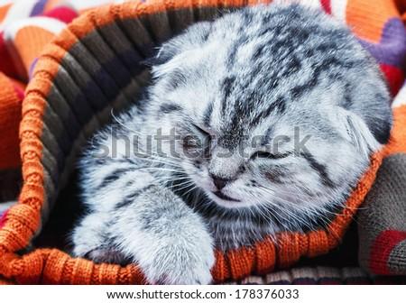 small kitten sleeping on a warm wool sweater - stock photo