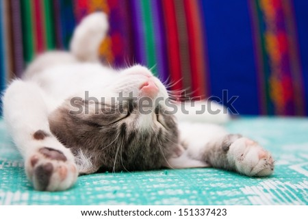 Small kitten sleeping on the bed - stock photo
