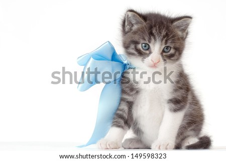 Small kitten with a bow on a white background - stock photo