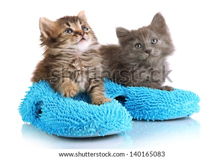 Small kittens sits on house slippers isolated on white - stock photo
