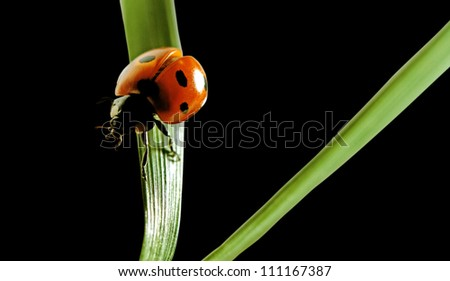 Small ladybird on the green grass. - stock photo
