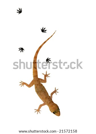 Small lizard over white background - stock photo