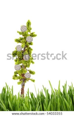 small miniature tree growing silver dollars isolated on a white background with grass foreground with plenty of copy space - stock photo