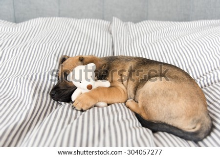 Small Mixed Breed Brown and Black Puppy Sleeping with Toy - stock photo