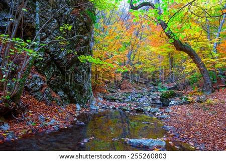 small mountain brook - stock photo