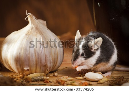 Small mouse with garlic in basement - stock photo