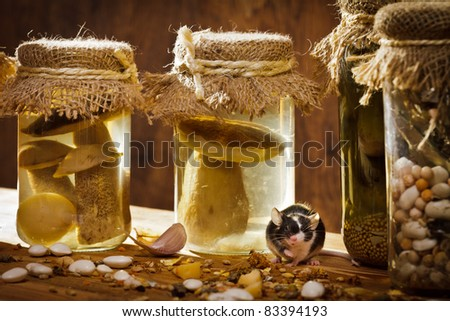 Small mouse with jars in basement - stock photo