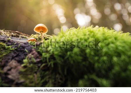 small mushroom in moss in forest  - stock photo