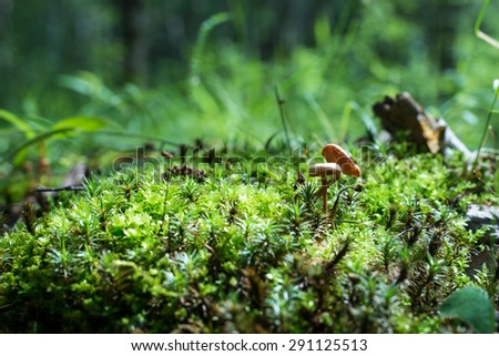 Small mushrooms in the moss - stock photo