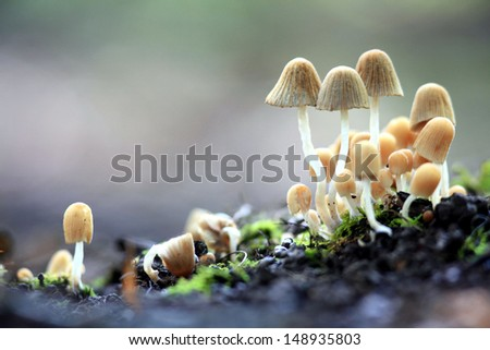 small mushrooms toadstools - stock photo