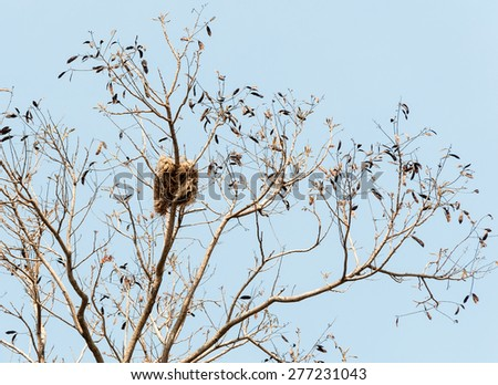 Small nest on the large tree in national park. - stock photo