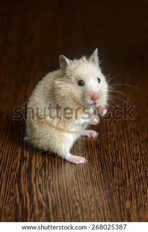 small nice hamster pale yellow on a wooden surface - stock photo