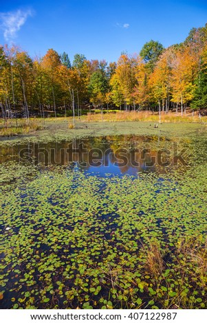 Small overgrown lilies lake in the autumn park. Sunny warm day in October in French Canada - stock photo