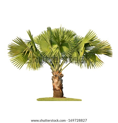 Small palm tree isolated on white - stock photo