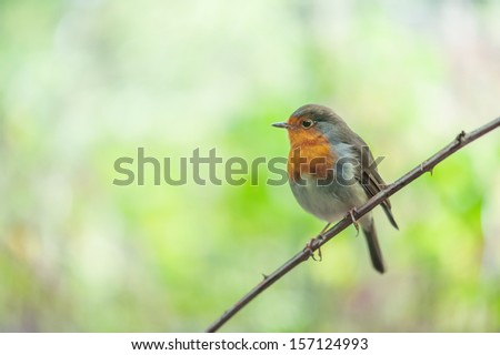 small parus on twig close up - stock photo