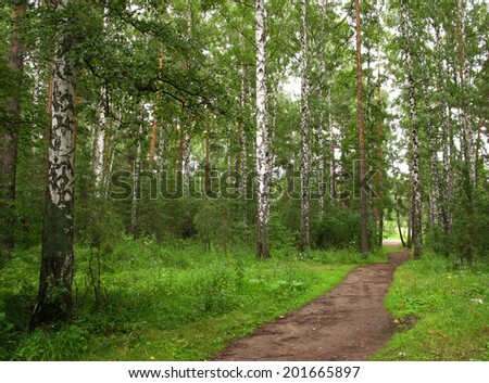 small path in green birch summer wood - stock photo