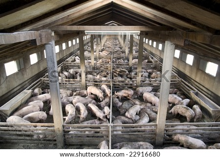 Small pig farm from above - stock photo