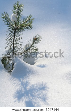 Small pine - stock photo