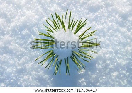 Small pine tree in the snow. - stock photo