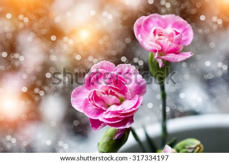Small pink carnations flower. - stock photo
