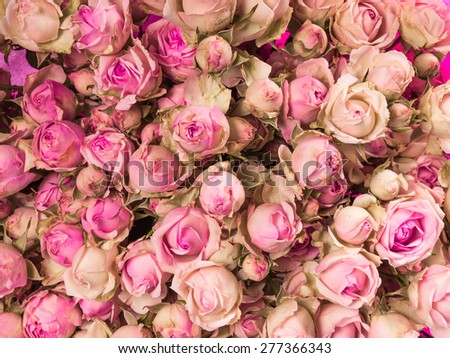 Small pink roses bouquet close up - stock photo