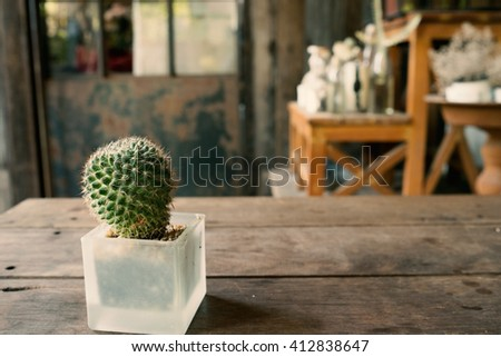 Small plant cactus and desert flora in glass flower pot on wooden table and garden background in warm tone/Small plant in flower pot in warm tone - stock photo