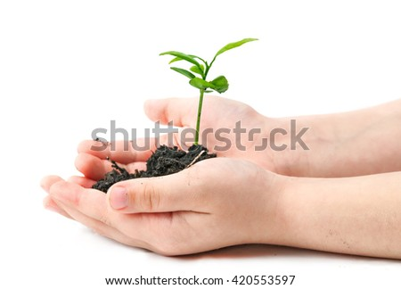 small plant cupped in child hands - stock photo