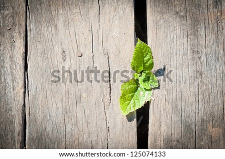 small plant growing below wood deck - stock photo