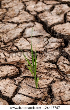 Small plant growth between cracked soil texture - stock photo