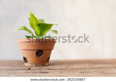 Small plant in brown flower pot on wooden table and cement wall background/Small plant in flower pot - stock photo