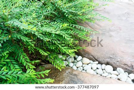 Small plant in garden - stock photo