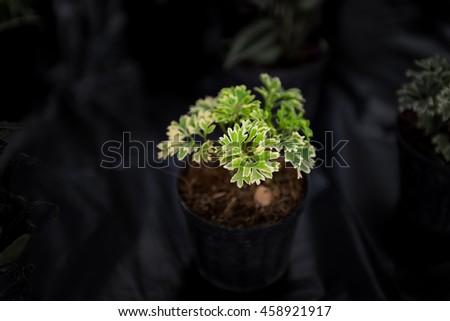 Small plant in plastic pot - stock photo
